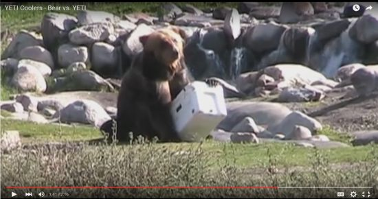 YETI VS. Grizzly Video From Youtube